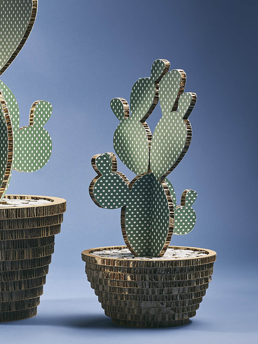 cactus in cartone alveolare