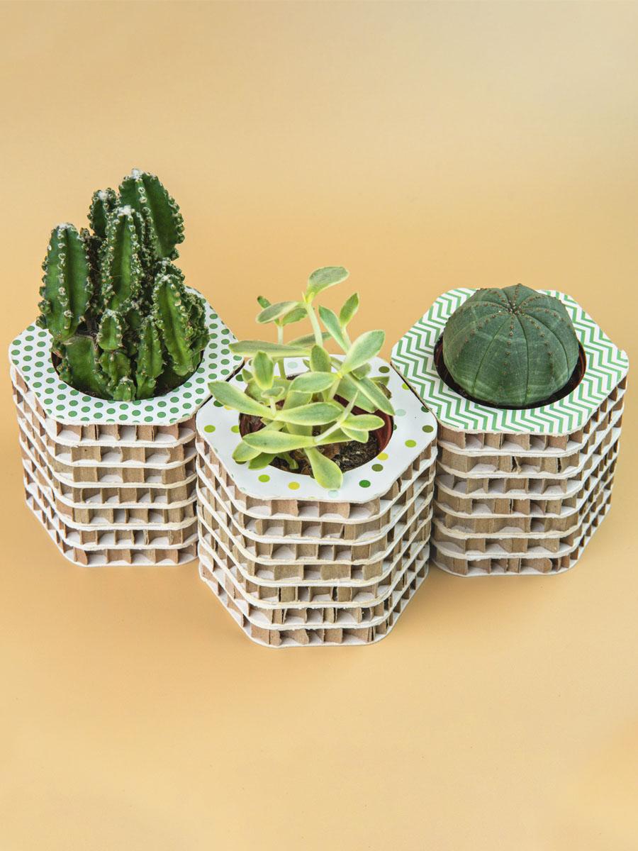 vasetto porta piantine piante grasse in cartone alveolare